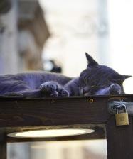 Sleepy kitty Cat Kotor Montenegro